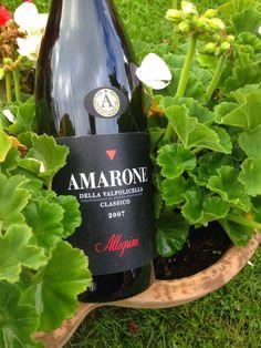 Allegrini's Amarone della Valpolicella, looks very drinkable in this garden shot.