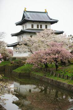 松前城 Cherry Blossom #orient #japan