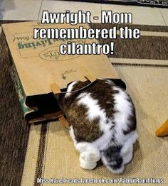 Guess I like to collect things. Here are some memes that have been found around the internet and perhaps been featured in a Rabbit Rambli. Animal Jokes, Funny Animal Memes, It's Funny, Funny Animals, Funny Stuff, Cute Animals, Bunny Paws, Bunny Bunny, Bunny Meme
