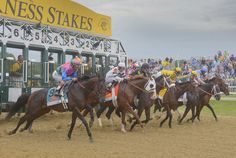 The nine horses in the 138th Preakness break from the starting gate at Pimlico Race Course.