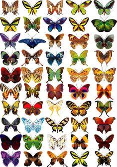 Impostare diversi variopinte farfalle - vettore Archivio Fotografico - 10758270