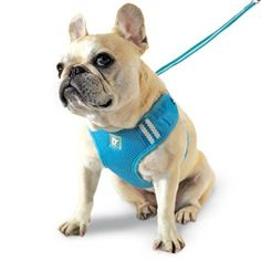 EasyGO Soft Step-In Dog Harness - Basic | PupLife Dog Supplies