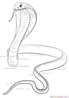 How to draw a ball python | Step by step Drawing tutorials ...