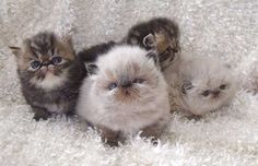 I want the pitiful one on the right! Fluffy Babies!!