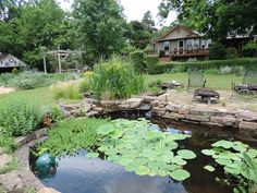 Koi pond with lily pads