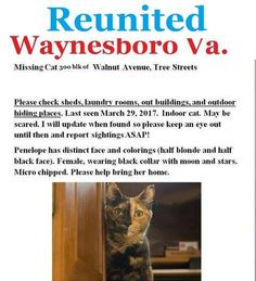 Reunited!!! 4/6/2017 Waynesboro Va. / Augusta County Virginia Penelope the cat was caught in a humane trap early this morning and now is back in the loving arms of her family. Patience, persistence, and a ton of good thoughts from everyone helped to bring her back inside her home where she belongs. Thank you! Yesterdays update: Penelope has been spotted via trail cam. We know the general vicinity she is hiding. However, she is obviously scared and not coming out when there are people around…