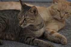 Cats of the island Manabe-shima 真鍋島