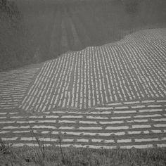 Available for sale from Chambers Fine Art, Taca Sui, Odes of Chen I - Fields on the Outskirts Silver gelatin print, 19 × 19 in Chinese American, Foto Art, Zoom Photo, Patterns In Nature, Shades Of Grey, Chen, Street Photography, Outdoor Blanket, Artsy