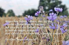 """Irischer Segenswunsch """"Möge aus jedem Samen, den du säst, wunderschöne Blumen werden, auf dass sich die Farben der Blüten in deinen Augen spiegeln und sie dir ein Lächeln aufs Gesicht zaubern."""""""