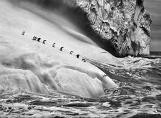 Chinstrap penguins dive off icebergs located between Zavodovski and Visokoi islands in the South Sandwich Islands, by Sebastião Salgado. In his recognizably lustrous black and white style, acclaimed photojournalist Sebastião Salgado c. Magnum Photos, Contemporary Photography, Landscape Photography, Minimalist Photography, Urban Photography, Color Photography, Flying Photography, Photography Office, Inspiring Photography