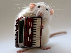 A tiny mouse with a tiny accordion!