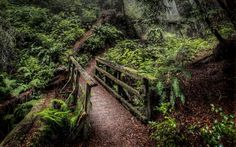 A mossy bridge on the trailmeandering up Mt. Tamalpais, Marin County. Photo: Lorenzo Montezemolo/Getty Images, Getty Images