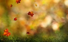 840103 Leaf Wallpapers | Photography Backgrounds