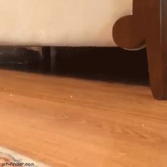 Upside Down Kitten Attack | Gif Finder – Find and Share funny animated gifs