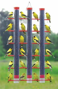 Yellow birds on a feeder; it's a full house!