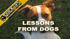 Lessons From Dogs; Quick Tips with Wolfgang Riebe