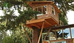 Tree houses Builder Of Dreams - InfoByss News