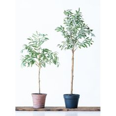 Natural looking and easy to care for, our faux olive tree blooms with deep green fabric leaves and realistic olives. Nestled in a terra-cotta pot, it adds a lush look to your space. Faux Olive Tree in Terra-cotta Pot Potted Olive Tree, Olive Plant, Faux Olive Tree, Potted Trees, Flowering Trees, Potted Plants, Artificial Tree, Artificial Flowers, Olives