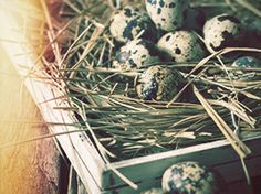 Why is Easter so critical to a Christian? Is Easter an outdated religious holiday, or is it something more? Why is Jesus' death such a big deal?  http://www.exploregod.com/what-does-jesus-death-have-to-do-with-easter