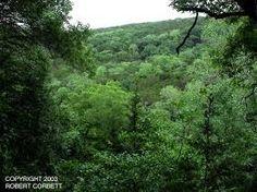 Image result for wooded hillside