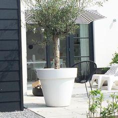 """292 Likes, 25 Comments - wobke van der wardt (@studio.ww) on Instagram: """"Wat een heerlijke dag! Niet verkeerd zo thuiskomen. Fijn weekend!  #weekend #garden #tuin…"""""""