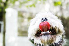 Muddy Love Photography | Pet Photography