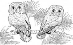 images of printerable adult coloring pages | Pages Picture 2 – Animal Print Owl Coloring Pages For Adults ...