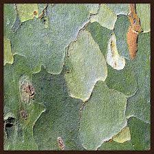 Platano. Texture mimetica indossata dal Tartadrillo. www.gioiellidinatura.it