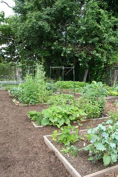 The VRPD is starting a community garden project! Call 415.2335 for more information.