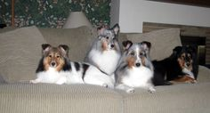 4on a couch