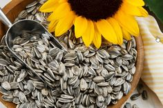 Sunflower seeds are a quick and healthy addition to a green salad or can be eaten plain as a snack. One serving, or 1 ounce of hulled seeds, contains muscle-building proteins and good fats that help lower your cholesterol and decrease inflammation. Sunflower Seeds Benefits, Pate A Muffins, Testosterone Boosting Foods, Increase Testosterone, Testosterone Booster, Testosterone Levels, Foods High In Magnesium, Can Dogs Eat, Dog Eating