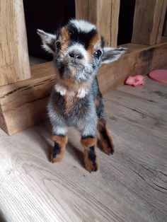 Cute Baby Cow, Baby Animals Super Cute, Cute Little Animals, Cute Funny Animals, Cutest Animals, Cutest Pets, Pictures Of Cute Animals, Funny Cats, Animals Doing Funny Things