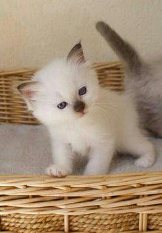 Sooooooooooooooooooooooooo cute and little