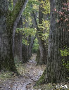 Forest Path, Tree Forest, Tree Story, Scenery Photography, Magical Forest, Nature Plants, Walk In The Woods, In The Tree, Nature Pictures