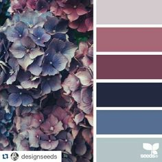"60 Likes, 3 Comments - Auntie Clara's (@auntieclaras) on Instagram: ""How very pretty is this palette?! ❤️ #Repost @designseeds ・・・ today's inspiration image for {…"""