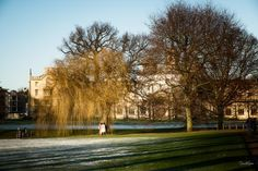 The sunlight on the weeping willow is what caugth my eye all else I was obvious to.
