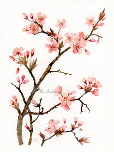 Prunus Floral Art Watercolor painting Original Pink flowers Flower art. $39.00, via Etsy.