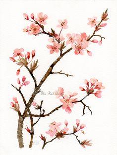 Prunus Floral Art Watercolor painting Original Pink flowers Flower art. $39.00, via Etsy.