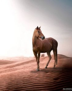 this is Camel Editing Background PicsArt HD Image editing Horse Background, Blur Image Background, Black Background Photography, Photo Background Images Hd, Background Images For Editing, Picsart Background, Instagram Background, Instagram Frame, Hd Background Download