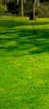 Lawn Alternatives - Eartheasy.com Solutions for Sustainable Living