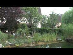 Schwimmteich im Reihenhausgarten - YouTube