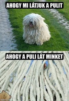 Funny Animal Pictures Of The Day – 22 Pics. Call 0420 270 260 for Perth Home Cleaners cleaning service. If you are expecting a premium quality of vacate cleaning, please do look for us. We can assure you that we will fulfill your expectation. Cute Funny Animals, Funny Animal Pictures, Funny Cute, Best Funny Pictures, Funny Photos, Funny Dogs, Funniest Animals, Funny Pix, Hilarious