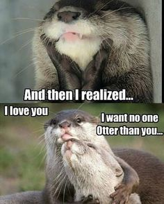 When you meet your significant otter, you'll know it's the real thing. #geekjoke #cheesy @anastasia_date #dating #date #love #like #instalike #instalove #passion #picoftheday #follow #fun #chat #relationshipgoals #relationship #romance #romantic #AnastasiaDate #otter #memeoftheday #instameme #funny #silly #geeky #significantother #quote #loveqoute #quoteoftheday