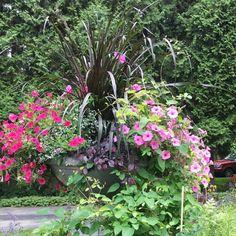 A trellis magic trick: Turn one into three Cottage Garden Design, Backyard Garden Design, Garden Steps, Garden Paths, Tropical Backyard Landscaping, Pool Plants, Backyard Bridal Showers, Wood Trellis, Glass Garden Art