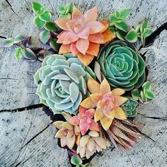 """1,455 Likes, 8 Comments - Succulent Lover (@succulentgram) on Instagram: """" from @yourearthlyspace"""""""