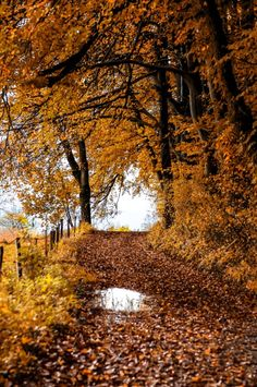Fall mornings seasons greetings pinterest autumn autumn nordvarg reminds me of the road in front of the house i grew up in by chris w m4hsunfo Image collections