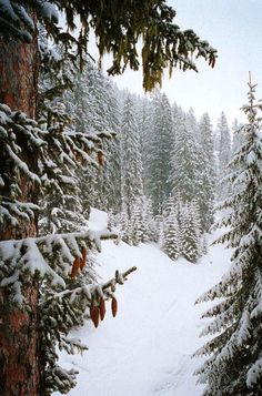 Find images and videos about nature, winter and snow on We Heart It - the app to get lost in what you love. Winter Szenen, I Love Winter, Winter Magic, Wallpaper Winter, Tree Wallpaper, Christmas Wallpaper, Snowy Day, Snowy Woods, Snowy Forest