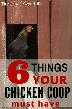 Coop Necessities: 6 Things Your Coop Must Have Make sure your chicken coop has everything it needs to keep your hens happy, healthy, and safe!Make sure your chicken coop has everything it needs to keep your hens happy, healthy, and safe! Chicken Coup, Best Chicken Coop, Backyard Chicken Coops, Building A Chicken Coop, Chickens Backyard, Chicken Pen, Chicken Ideas, Chicken Coop Plans Free, Clean Chicken