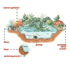 Everything you need to know to build the perfect backyard pond. | Illustration: Rodica Prato | thisoldhouse.com