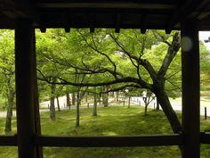Like a picture frame... At Tofuku-ji temple. Kyoto Japan.2012. Summer